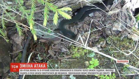 В реанимации из-за укусов змей оказались 69-летняя женщина и 9-летний мальчик