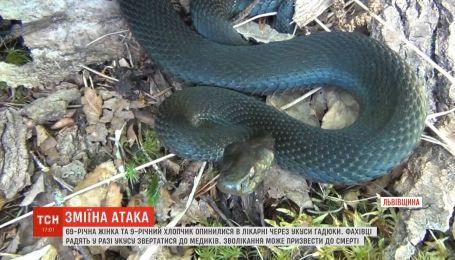На Львовщине из-за укусов змей в реанимации оказались 69-летняя женщина и 9-летний мальчик