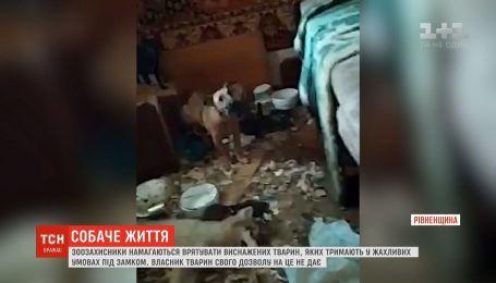 Мужчина на своем подворье удерживает мертвых, искалеченных, голодных собак и котов