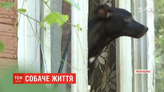 На Рівненщині зоозахисники знайшли зморених і покалічених котів і собак