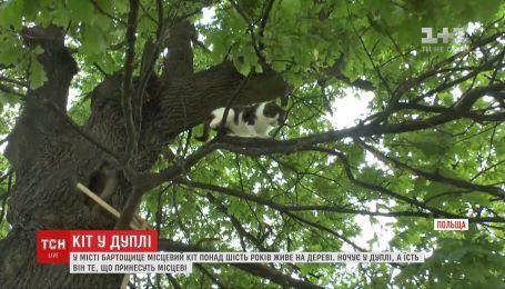 Кот польского города Бартошице более шести лет живет на дереве