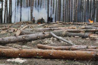 СБУ разоблачила схему незаконной вырубки леса на 14 млн гривен