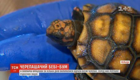 В зоопарке Вроцлава за несколько дней вылупились сразу восемь черепах