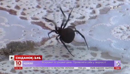 Непомітні та смертельно небезпечні: як вберегтися від укусів отруйних змій і павуків