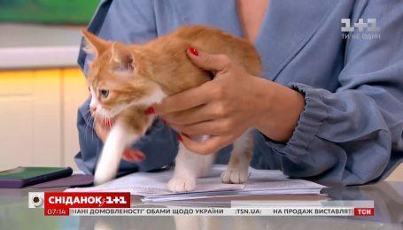 Котята Рыжик и Пятнашка ищут дом
