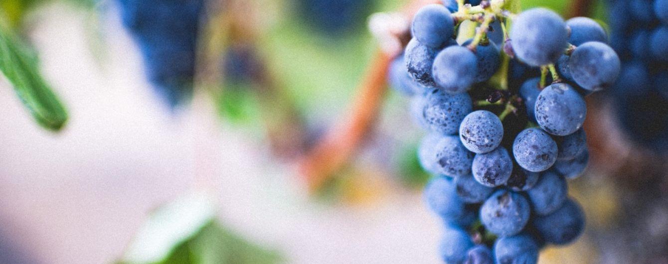 Богатый урожай украинского винограда: ягода впервые продается дешевле картофеля