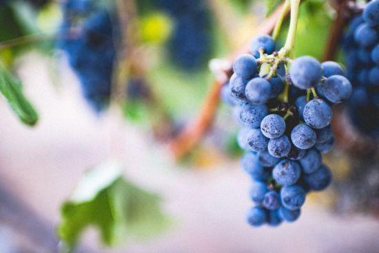 Багатий врожай українського винограду: ягода вперше продається дешевше за картоплю