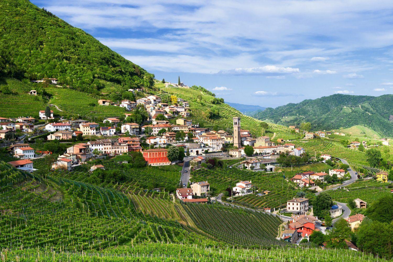 холмы, виноград