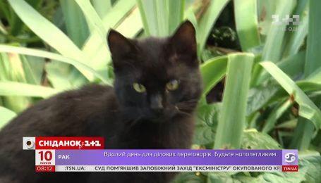 У Львові порахували вуличних котів