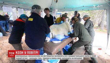Американские зоозащитники на вертолетах перевозят коз из парка в горы