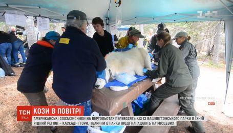 Козы в воздухе: американские зоозащитники на вертолетах перевозят животных в их родной регион