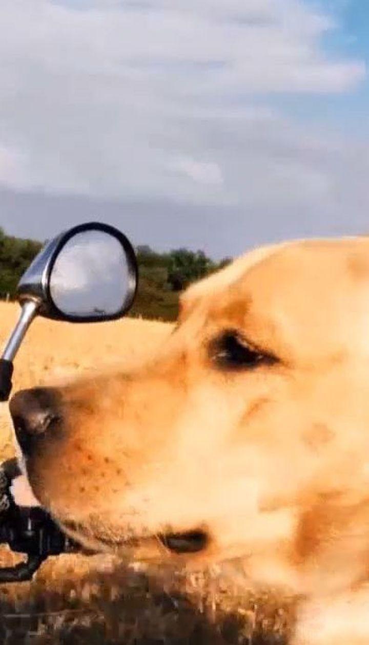 Не такий як усі: у Полтаві пес їздить верхи на байку, працює моделлю та ходить вдома до вбиральні