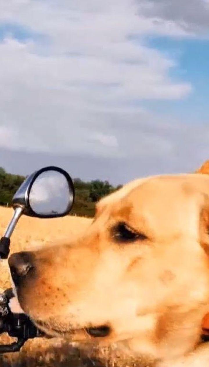 Не такой как все: в Полтаве пес ездит верхом на байке, работает моделью и ходит дома в туалет