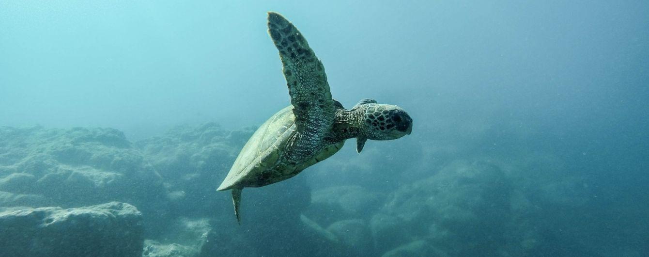 Телеканал National Geographic снимет документальный фильм о природе Абу-Даби