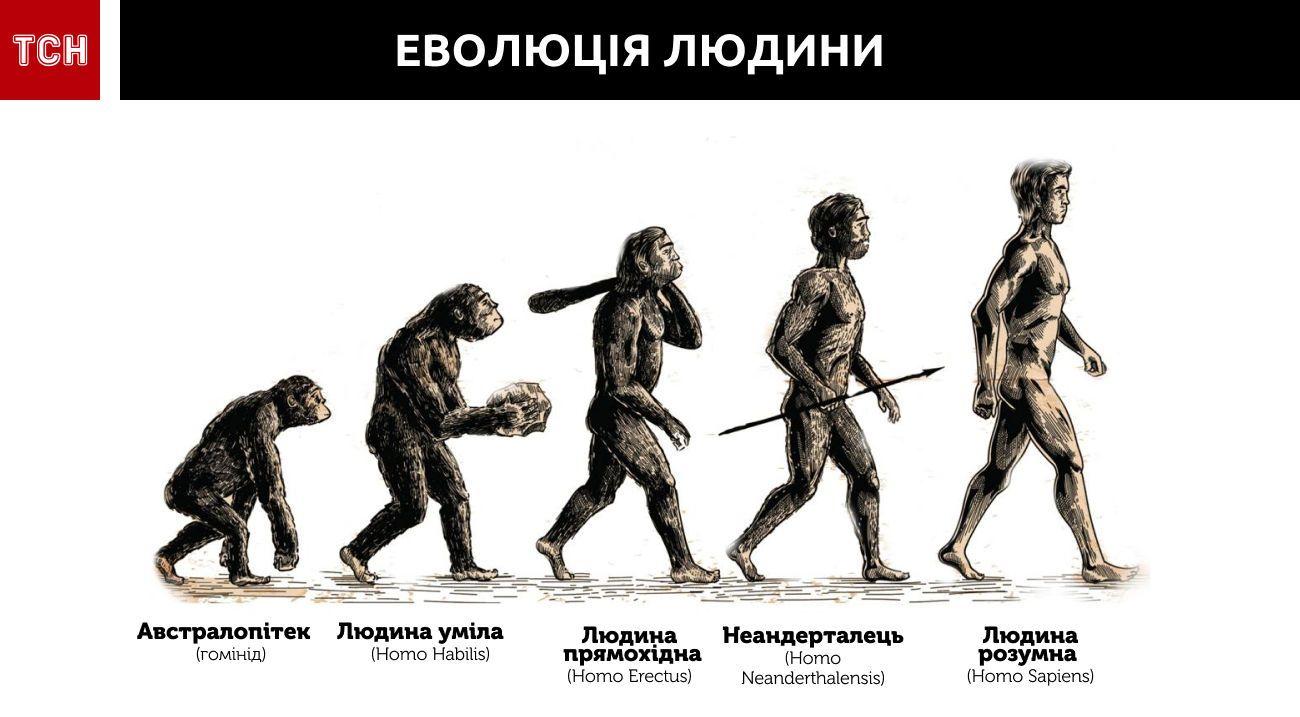 еволюція людини інфографіка 2