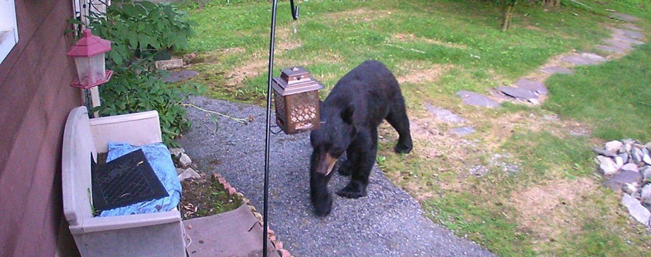 В США засняли бесстрашного пса, который выгнал со двора наглого медведя