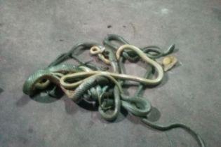 Таиландец услышал шум изнутри кондиционера. Он нашел там змей