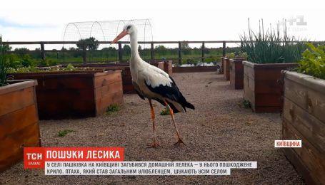 Пошуки Лесика: на Київщині загубився домашній лелека