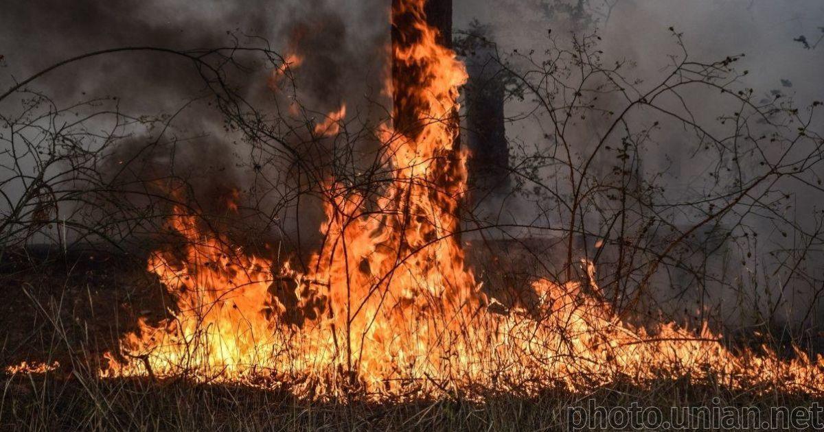 Рада ужесточила ответственность за провоцирование пожаров в лесах: насколько выросли штрафы