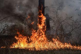 Синоптики сообщили об опасности пожаров в Киевской области