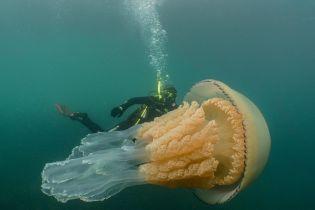 У побережья Британии обнаружили гигантскую медузу, больше человека