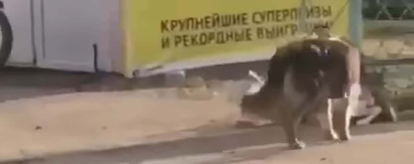 Мережу замилувало відео з безпритульним псом, який відв'язує породистого собаку