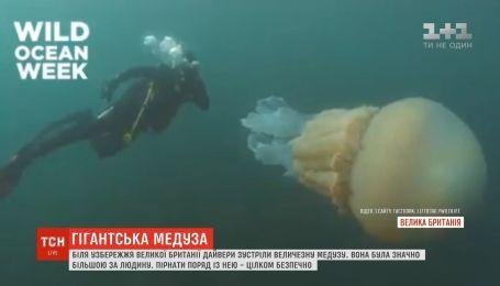 Близ побережья Великобритании дайверы встретили огромную медузу