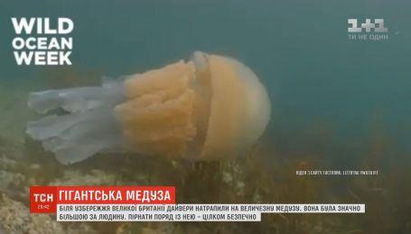 Биологи встретили огромную медузу у побережья Великобритании