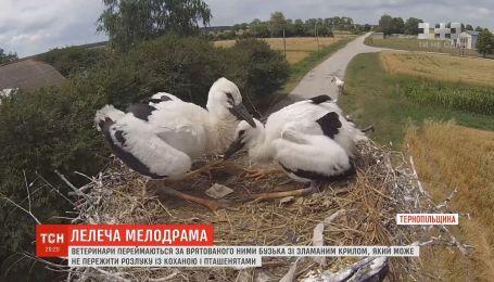 Ветеринари переймаються за бузька зі зламаним крилом, який може не пережити розлуку з коханою