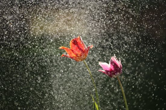 Погода на вівторок: в Україні обіцяють короткочасні дощі та грози
