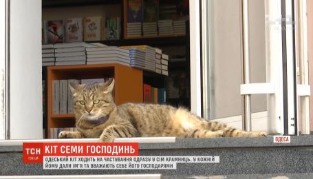 Одесский кот ходит на угощения сразу в 7 магазинов