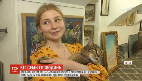 В Одессе хитрый кот ходит кушать сразу к семи разным хозяйкам