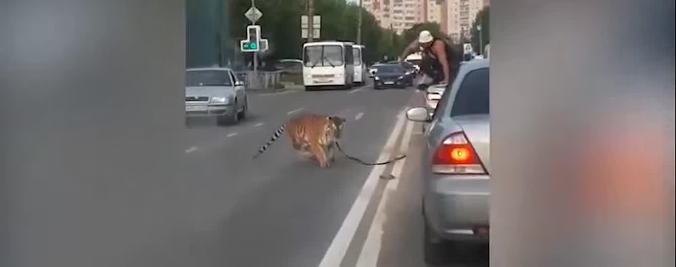 Бегство тигра из машины в РФ и соблазнительная фигура Кайли Дженнер. Тренды Сети