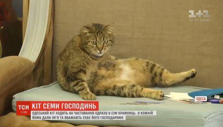 Кот-хитрец лакомится вкусностями сразу у 7 хозяек в Одессе