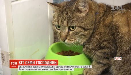 Хвостатий мандрівник: одеський кіт ходить на гостини одразу до кількох господинь