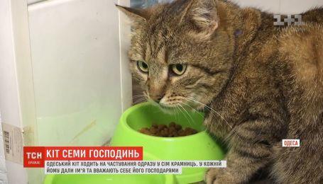 Хвостатый путешественник: одесский кот ходит в гости сразу к нескольким хозяйкам