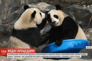 Китайським репортерам вдалося зафільмувати кумедне купання великої панди