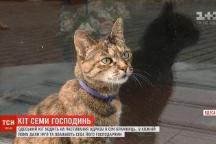 Сердца людей в центре Одессы пленил кот, имеющий семь имен и приносящий успех