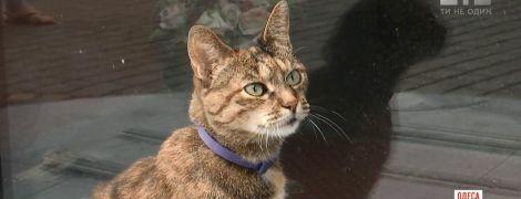 Серця людей у центрі Одеси полонив кіт, що має сім імен і приносить успіх