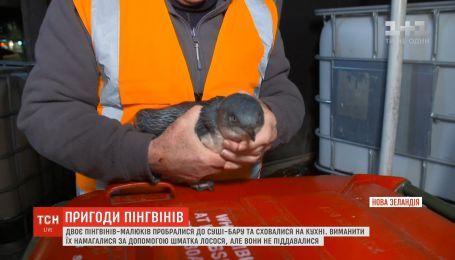 У Новій Зеландії двоє пінгвінів пробралися до суші-бару та сховалися на кухні