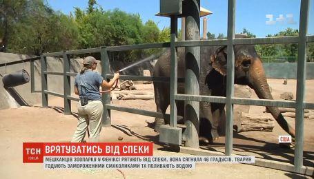 Овощные сорбеты и регулярные купания: обитателей зоопарка в Фениксе спасают от жары