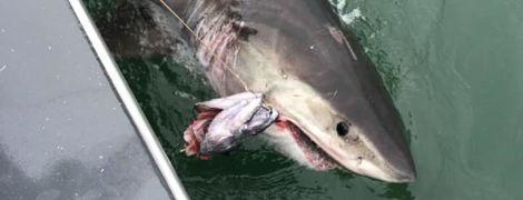 У США небезпечна акула протягнула човен із групою рибалок на три кілометри вперед