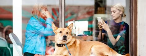 Юрист рассказал, можно ли в Украине ходить в кафе и рестораны с собаками