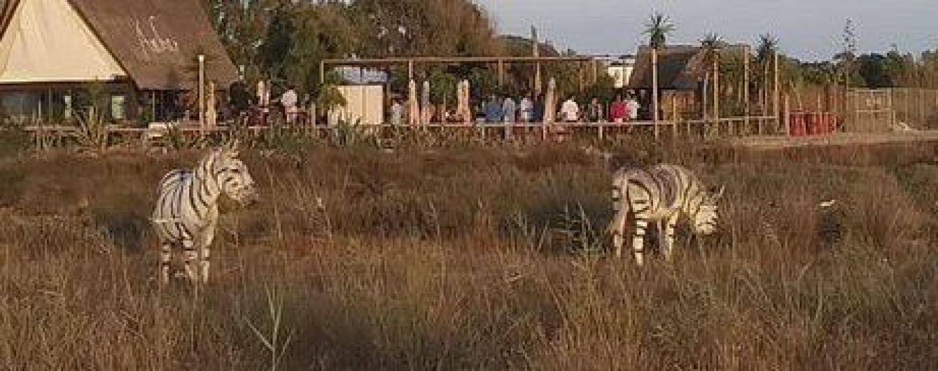 В Испании двух ослов покрасили в зебр для вечеринки: зоозащитники возмущены