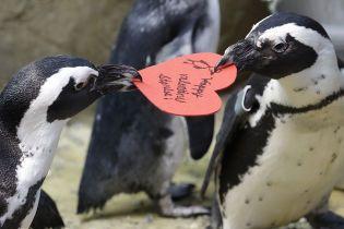 В суши-бар в Новой Зеландии пришли пингвины