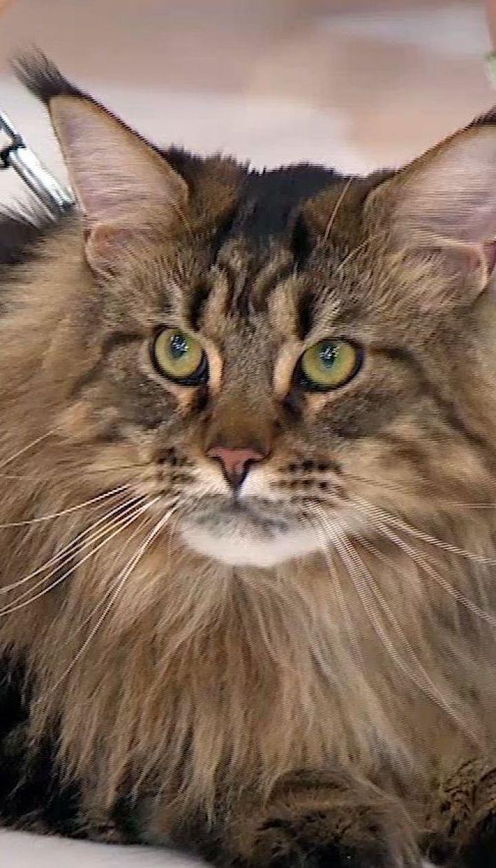 Кіт, що врятував хазяйку від самогубства: історія Марії та її друга Кекса