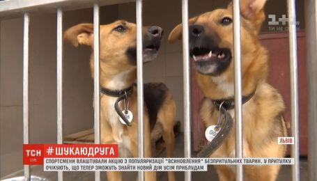 Во Львове известные спортсмены испытали себя волонтерами в центре бездомных животных