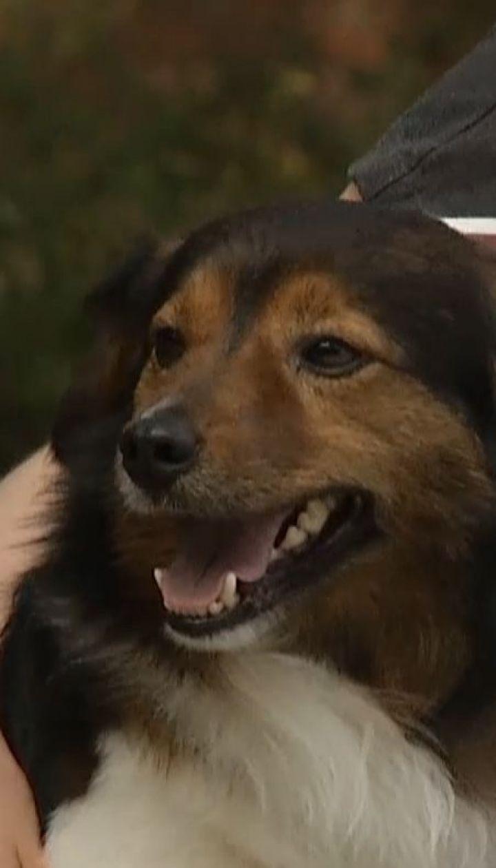 В Польше пес покинул хозяйку, чтобы отыскать свою возлюбленную