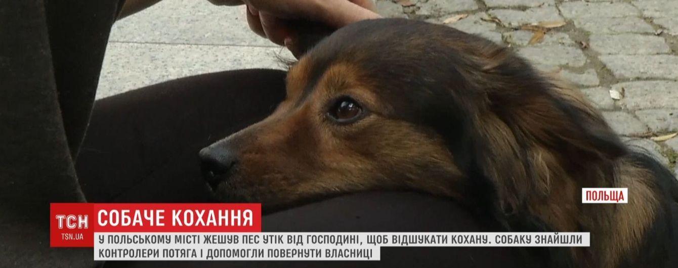 В Польше пес сбежал из дома и сел на поезд, чтобы воссоединиться с любимой