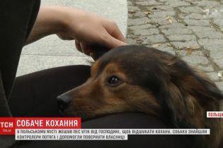 У Польщі собака втік з дому і сів на потяг, щоб возз'єднатись з коханою